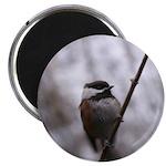 Chickadee Winter Magnets