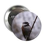 Chickadee Winter 2.25