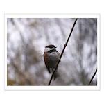Chickadee Winter Small Poster