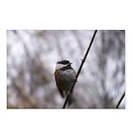 Chickadee Winter Postcards (Package of 8)