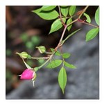 Perfect Pink Bud Square Car Magnet 3