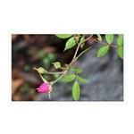 Perfect Pink Bud Rectangle Car Magnet