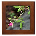 Perfect Pink Bud Framed Tile