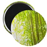 Bamboo Forest Magnets