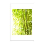 Bamboo Forest Poster Print