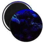 Dark Coral Magnets