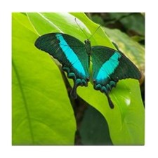 Green Moss Peacock Butterfly Tile Coaster