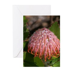 Exotic Greeting Cards