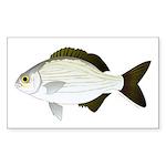 Bermuda Chub Sticker