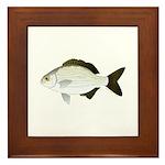 Bermuda Chub Framed Tile