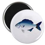 Blue Sea Chub Magnets