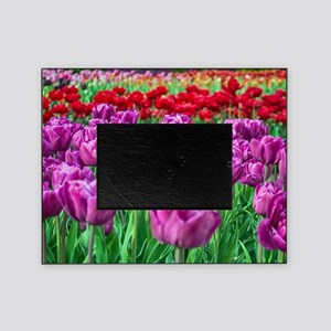 Tulip Field Picture Frame
