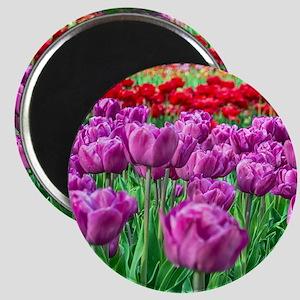 Tulip Field Magnets