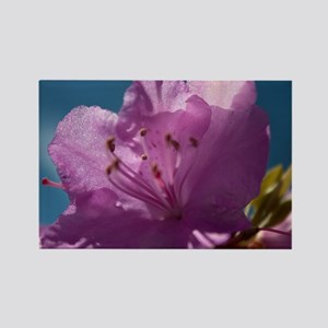 Pretty spring pink magnolia  flow Rectangle Magnet