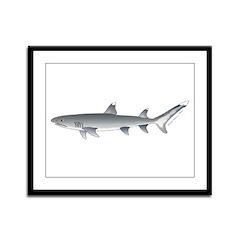 Whitetip Reef Shark Framed Panel Print