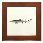 Whitetip Reef Shark Framed Tile