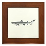 Whitetip Reef Shark Framed Tile
