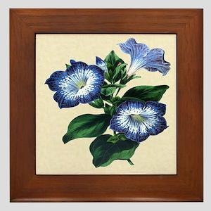 Paxton's Petunia punctata Framed Tile