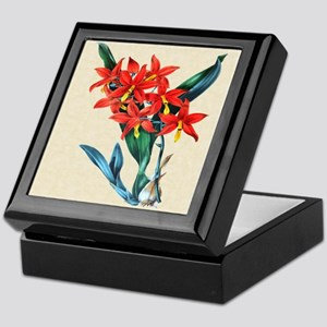 Paxton's Epidendrum Vitelinum Keepsake Box