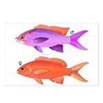 Yellowstriped Fairy basslet Anthias Couple Postcar