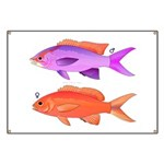 Yellowstriped Fairy basslet Anthias Couple Banner