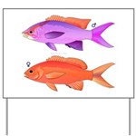 Yellowstriped Fairy basslet Anthias Couple Yard Si