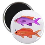 Yellowstriped Fairy basslet Anthias Couple Magnets