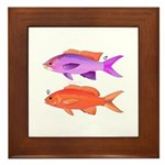 Yellowstriped Fairy basslet Anthias Couple Framed