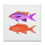 Yellowstriped Fairy basslet Anthias Couple Tile Co