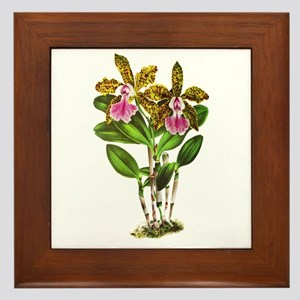 Tropical Cattleya Orchid by Lindenia Framed Tile