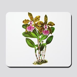 Tropical Cattleya Orchid by Lindenia Mousepad