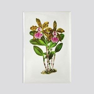 Tropical Cattleya Orchid by Linde Rectangle Magnet