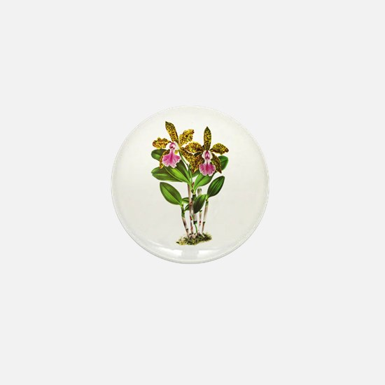Tropical Cattleya Orchid by Lindenia Mini Button