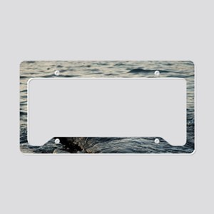 Marine crabs on a rock License Plate Holder