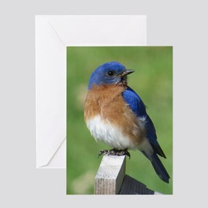 Bluebird greeting cards cafepress bluebird greeting cards m4hsunfo Image collections
