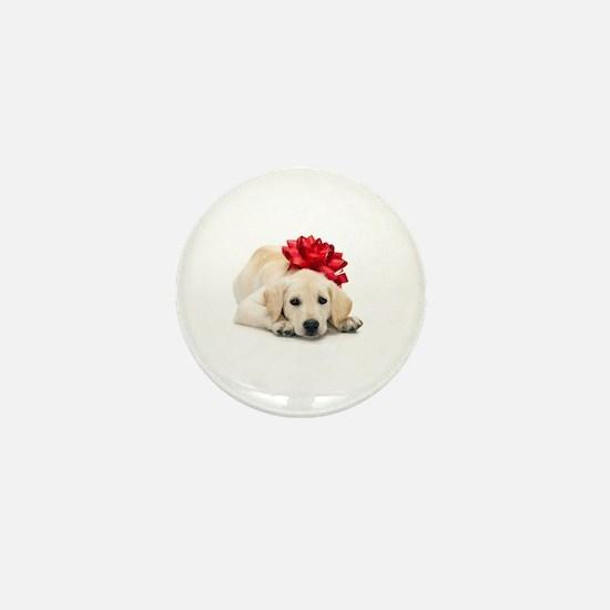Golden Retriever Puppy with R Mini Button