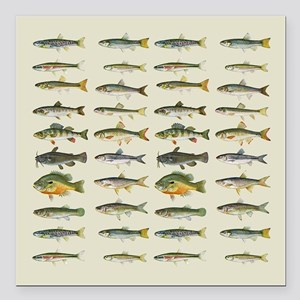 "Freshwater Fish Chart Square Car Magnet 3"" x 3"""