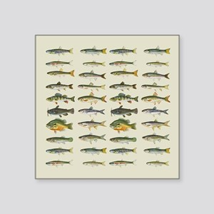 "Freshwater Fish Chart Square Sticker 3"" x 3"""