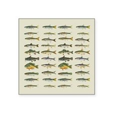 Freshwater Fish Chart Square Sticker 3