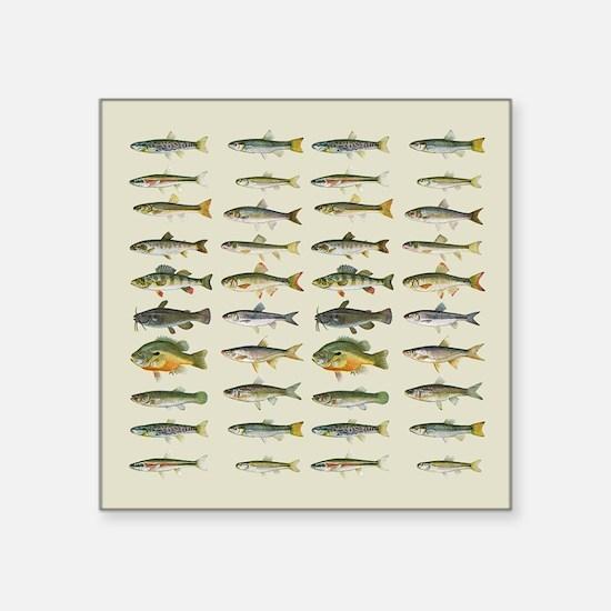 "Freshwater Fish Chart Square Sticker 3"" x 3"""