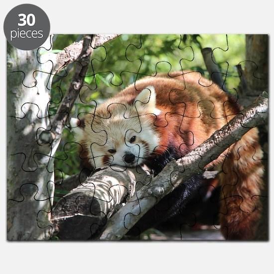 Sleepy Red Panda Puzzle
