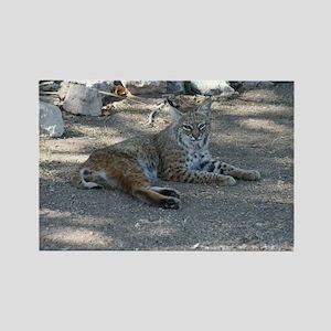 Bobcat Magnets