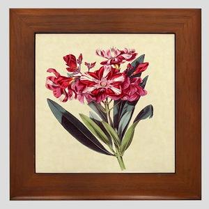 Paxton's Nereum Oleander Tangle Framed Tile
