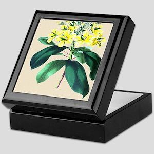 Paxton's Luxemburgia ciliosa Keepsake Box