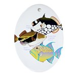 3 Triggerfish Ornament (Oval)
