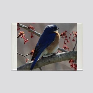 Bluebird Perching Magnets
