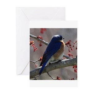 Bluebirds greeting cards cafepress m4hsunfo