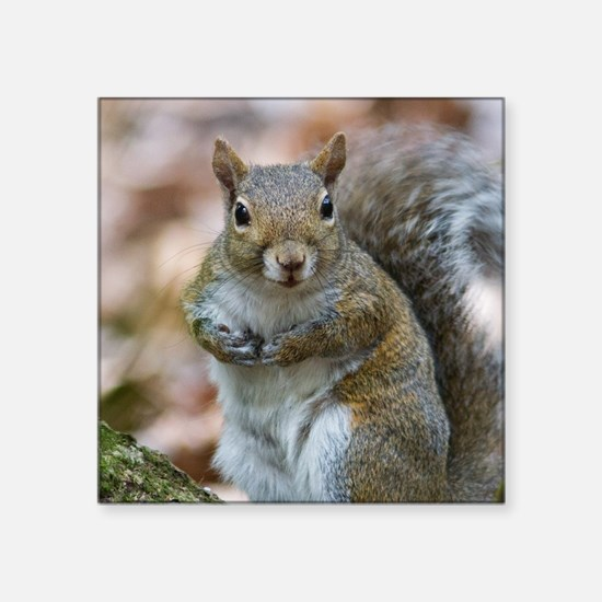 "Cute Squirrel Square Sticker 3"" x 3"""