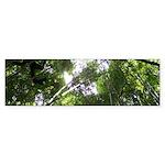 Forest Canopy (Sugar Skull) Sticker (Bumper)
