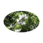 Forest Canopy (Sugar Skull) Oval Car Magnet
